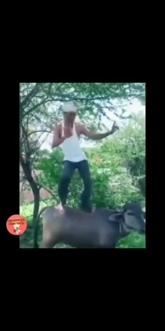 you have received message  #funnyvideo