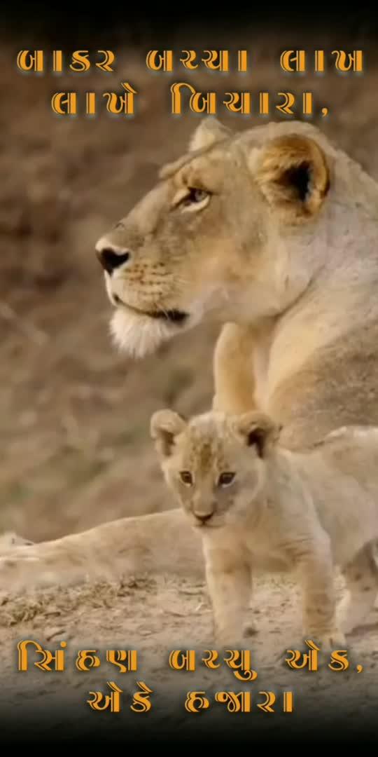 #attitude #status #lion #heart #lionking #lionessqueen