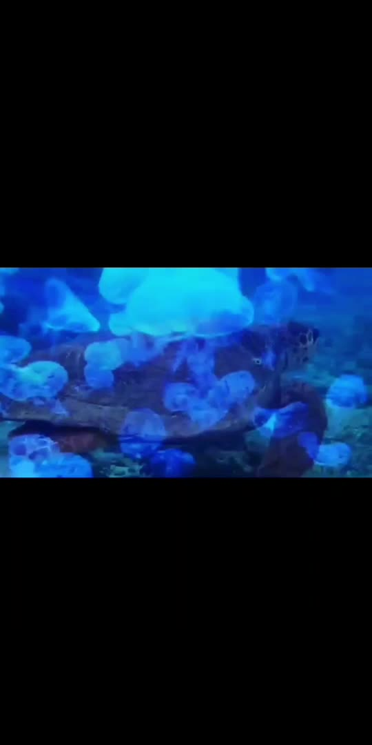 """"""""""" https://youtu.be/gzZpvnT-0lc """""""" click on link ☝️☝️ for full video 🥳🥳😊😊 beautiful music 😇😇😇😇😇 #relaxing #relaxingvideo #relaxingsound #relaxingmusic #fish #fishlovers #natural #nature #naturepgotography #naturelover #sea #music #funny #funnyvideo #funnypost #fun #whatsappstatus #whatsapp_status_video #whatsapp-status #whatsapp #status #statusvideo #youtube #subscribe #subscribemychannel #love #lovesong #lovesong"""