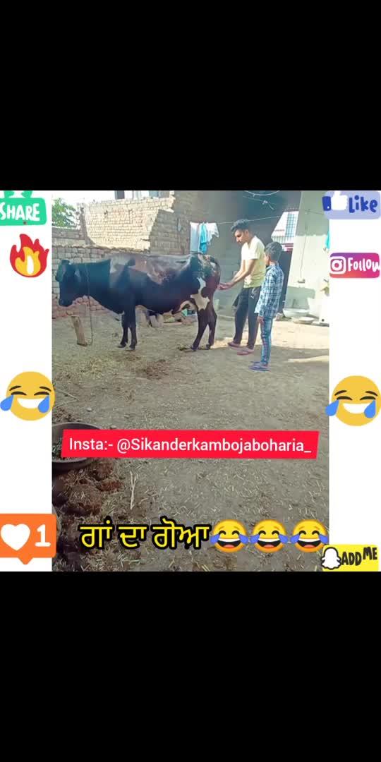ਗਾਂ ਦਾ ਗੋਆ😂😂 watch end wait a twist😂😂 #sikanderkambojaboharia_ #pb15abohar #pb15industry #fun #funny #funny #funnypost #shortvideo #videocreator #punjabifunny #memes #quotes #comedy