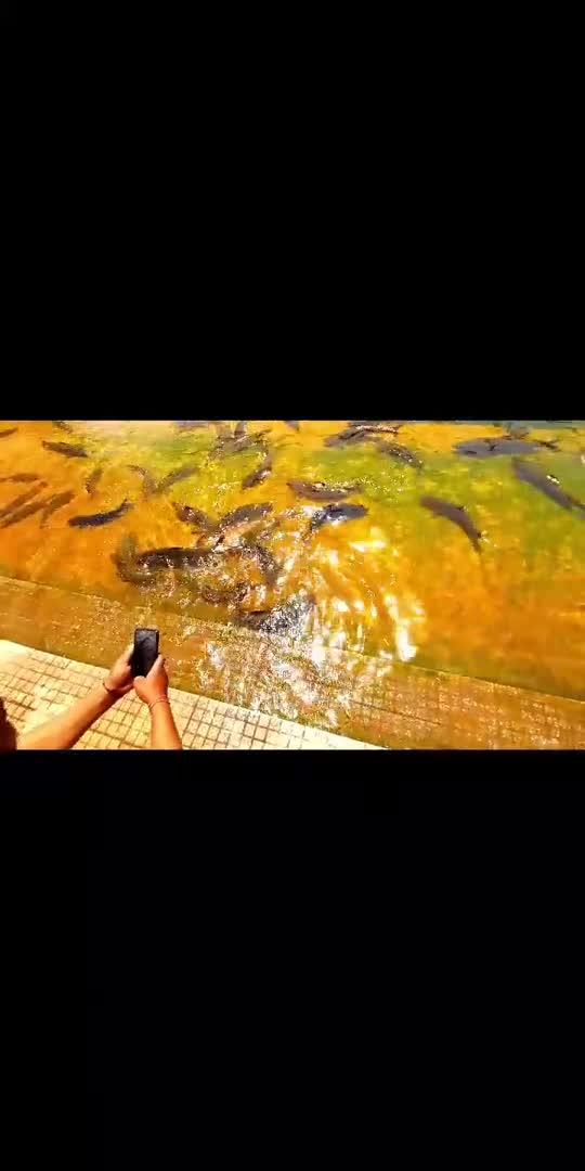 omg kitni sari fish