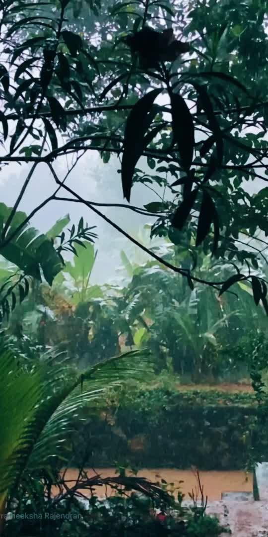 #rain #naturelover #nature #mood #vibe #vibes #moodygrams #moodygram_kerala