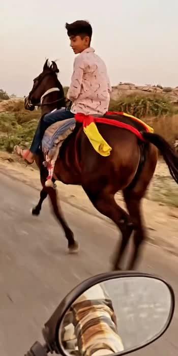 #horselover