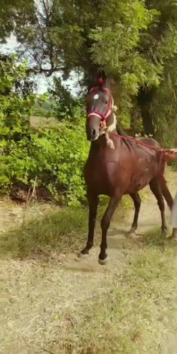 #horselover #horselover