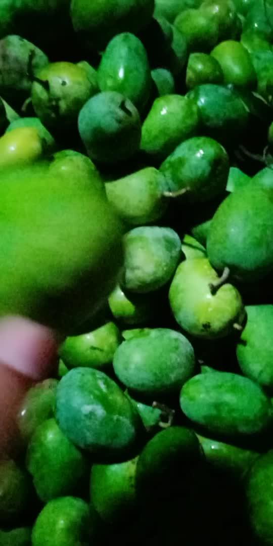 #mango  #mangolover  #mangoseason