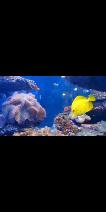 #oceanofkindness #viral #sruthihassan #fillmyworldwithlove #naturelover