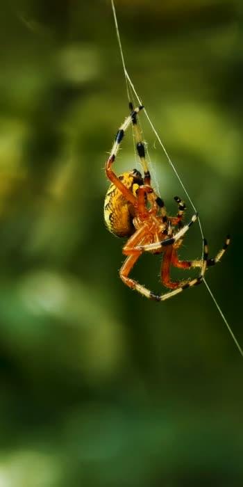 spider#spider🕷