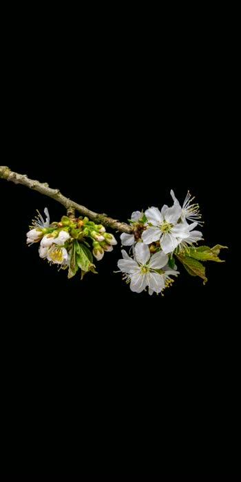 Blooming Flower    Flowers flowers,,