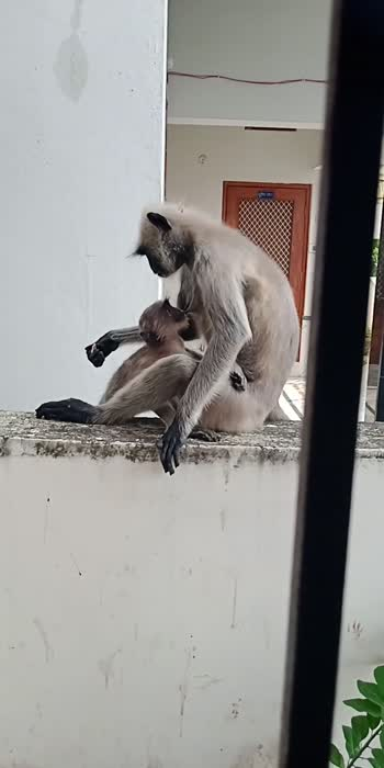 ##mother love## mother love##