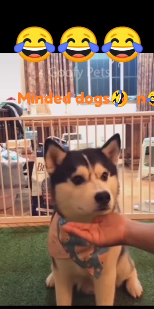 #doglover #doglove #dog #dogs