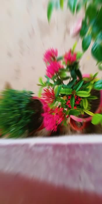#flowers #flowers #movie