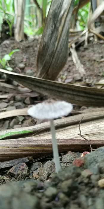 #mashroom #nature