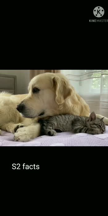 #dog lovers#pet lovers#cat lovers