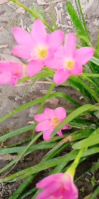 #flowers #flowers #roposotar
