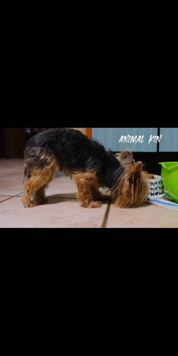 https://youtu.be/4BHqNZOXk-k visit my channel via this link for more videos  #eatingspeed   of dog.#cutedog #puppylover #puppy