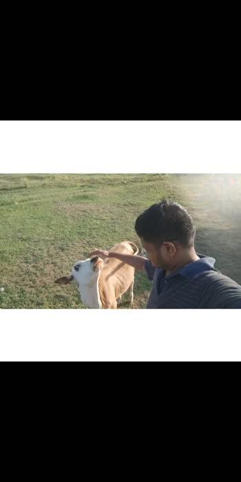 #annamalaisong#annamalai#annamalai_dialogue#cow#rajinikanth