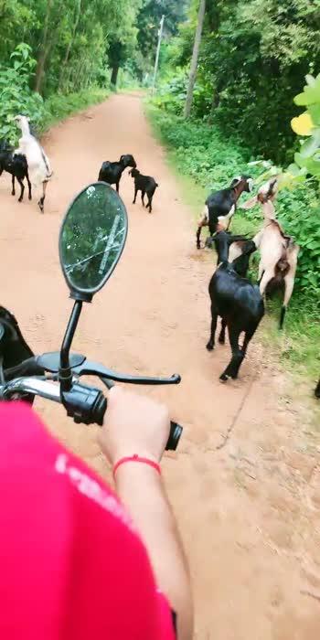 #bengalihitsong #barsore #bikeride