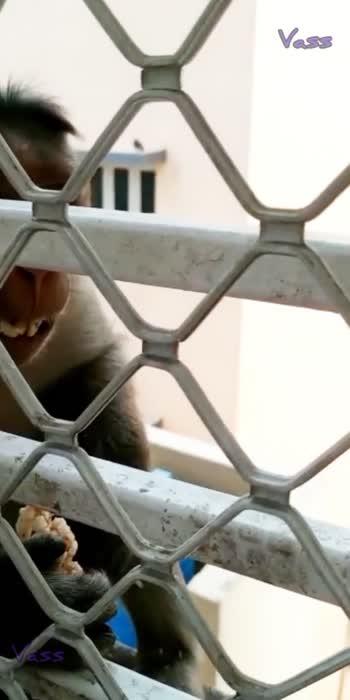 #monkey #eatingspeed #hungrymonkeys #papadam #roposocool #latestwhatsappstatus2021 #roposo-beats #roposostatus