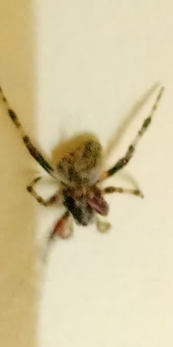 #spider